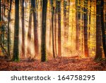 Enchanted Autumn Forrest