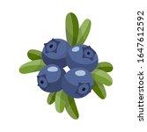 blueberry isolated on white... | Shutterstock .eps vector #1647612592