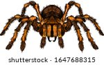 Tarantula Spider Brown Shaggy...