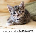 Very Cute Tabby Kitten Resting...