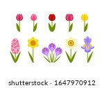 Spring Flowers Isolated On...