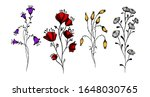 A Set Of Wildflowers. Vector...