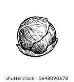 brussels sprout. ink sketch... | Shutterstock .eps vector #1648090678
