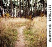 Path  Footpath Through A Fores...