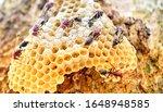 Vespidae Wasps Nest Or Wasps....