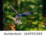 Bird Fly Landing Pn Tree Trunk...