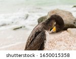 Lone Cormorant With Yellow Five ...