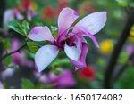 Gentle Beauty Flowering...