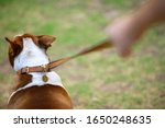 Small photo of Man walking dog on grass, rear view, close-up (differential focus)