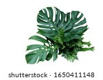 Tropical Green Leaves Forest...