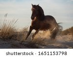 Happy Brown Spanish Horse On A...