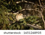 One Mourning Dove Sitting In...