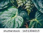 Moist Green Tropical Leaves....