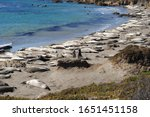 The Piedras Blancas Beach, also known as the Elephant Seals Beach, is just north of Hearst Castle and San Simeon, near Cambria on California's Central Coast along the Pacific Coast Highway.
