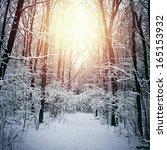 Vintage Winter Forest...