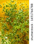 Small photo of Fresh green microgreens (Lepidium sativum and Eruca sativa) in plastic tray growing in sunlight. Vertical photo of fresh garden cress and arugula sprouts