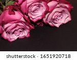 Black Background With Roses....