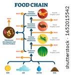 Food Chain Vector Illustration...