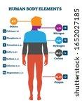 human body elements  vector... | Shutterstock .eps vector #1652027185