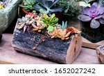 Small photo of A variety of succulent plants are displayed in creative planters, including one that is a hallowed out log