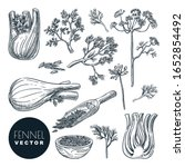 fennel plant root  leaves and... | Shutterstock .eps vector #1652854492