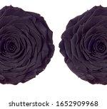 Macro Closeup Of A Dark Black...