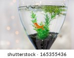 aquarium with gold fish as... | Shutterstock . vector #165355436
