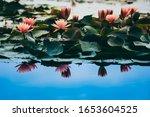 Lotus Flower Concept. Pink...