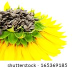 Sunflower Isolated On A White...