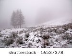 Trees in snow landscape and fog - stock photo