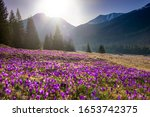 Beautiful Spring Landscape Of...