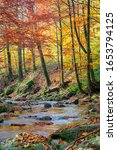 Forest River In Autumn. Rapid...