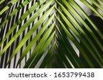 Green Tropical Palm Leaf Close...