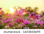 A Flower Background Picture Of...