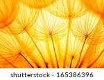 dandelion seed in golden... | Shutterstock . vector #165386396