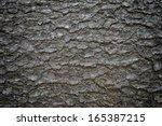 Close Up Of An Pine Tree\'s Bark