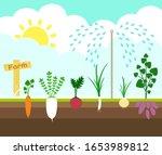 Farming Crop Vegetables Growin...
