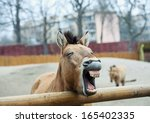 Stock photo funny horse 165402335