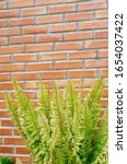 fern leaves with brick... | Shutterstock . vector #1654037422