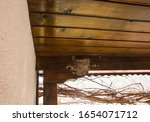 Small photo of Swallow nests in the corner of house walls. Nest of cliff swallows under the roof. Sitting of chimney swallow. Nest of barn swallow. Nest of chimney swallow. Roost of chimney swift