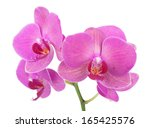 Pink Orchid Flowers. Isolated...