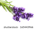 lavender flower isolated  | Shutterstock . vector #165443966