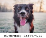 Lovely Dog Close Up Portrait...