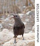 Small photo of Squawking bird at Dead Sea Israel