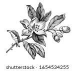 apple blossom vintage floral... | Shutterstock .eps vector #1654534255