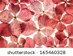 Background With Pink Hydrangea