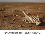 Skeleton In Desert With Single...