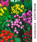Small photo of Colorful spring flowers tulips. Flower beds with bright tulip flowers. Spring floral dutch background.
