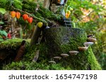 Small photo of A close up selective focus view of a whimsical miniature fairy town on a moss covered tree stump in a forest, mushroom stepping stones and colorful decor