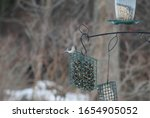 A Tufted Titmouse Seating On A...